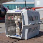 Renouvellement de l'aéroport de Bordeaux sur le fret végétal et animal